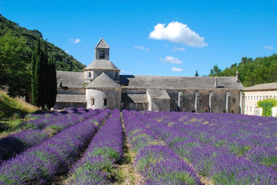 Abbaye de Sénanque lavender field france province