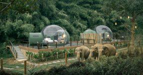 JUNGLE BUBBLE : SLEEP AMONGST ELEPHANTS