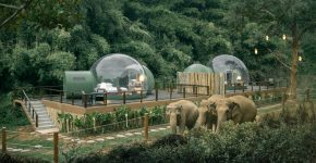 JUNGLE BUBBLE : SLEEP AMONGST ELEPHANTS