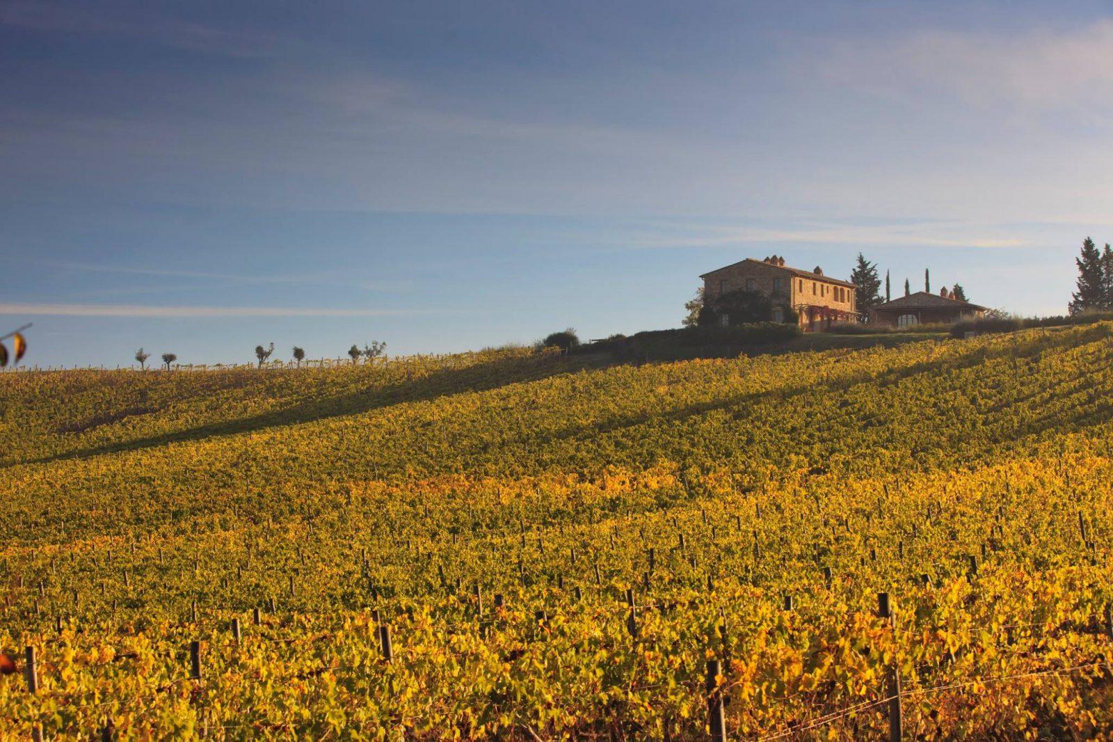 Castiglion del Bosco Tuscany wine harvest