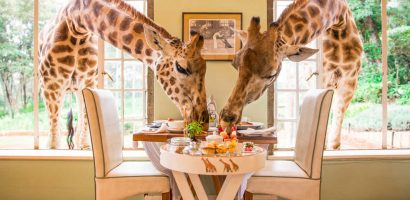HOTEL THAT LETS YOU DINE WITH GIRAFFES