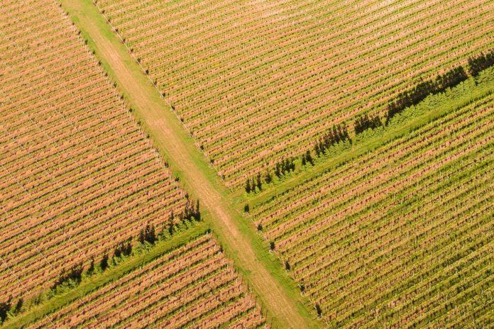 Hattingley Valley vineyards in uk