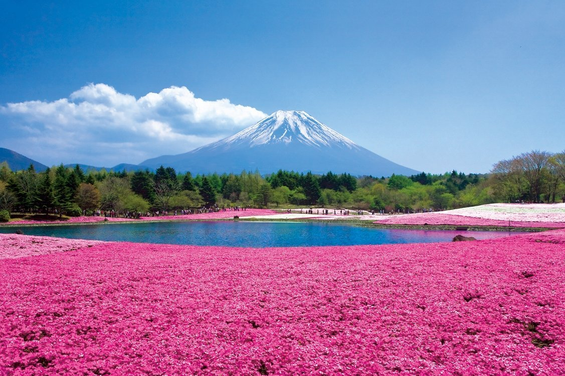 Hitsujiyama Park pink moss spring destination