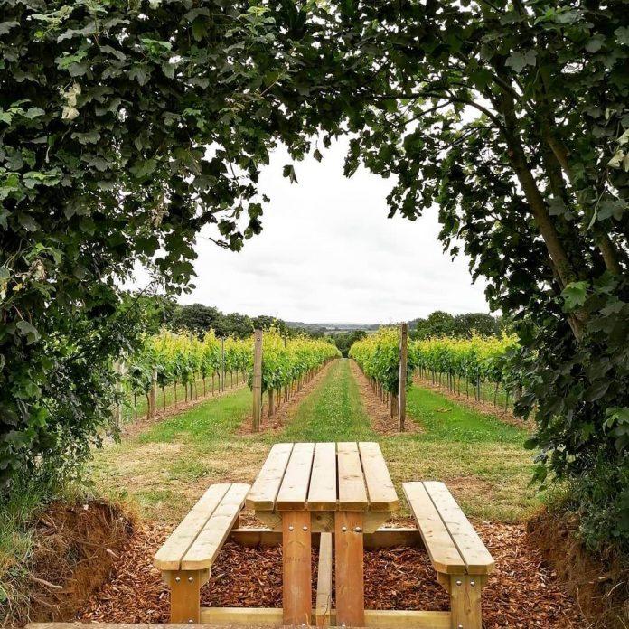 Langham Wine Estate, Dorset vineyards in uk