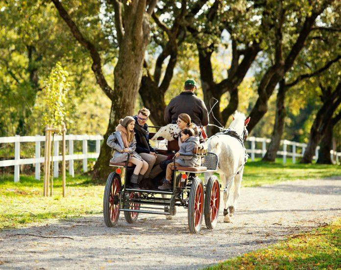 Lipica Lipizzaner horses in slovenia