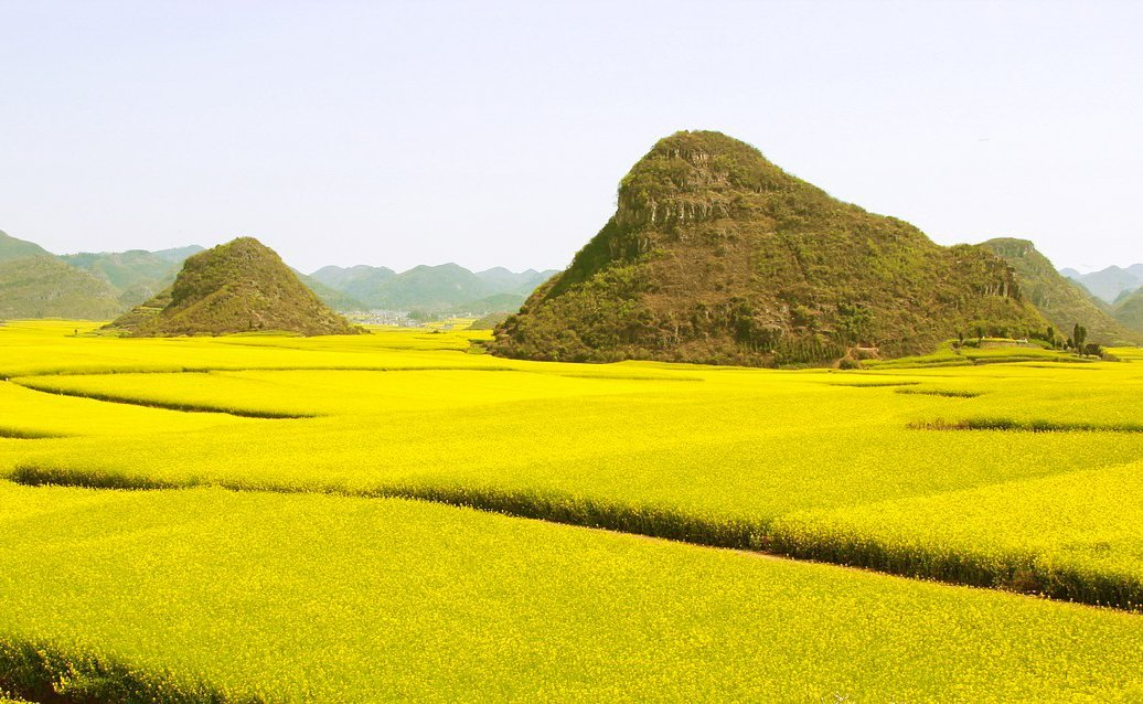 Rapeseed fields in Luoping, China  spring destination