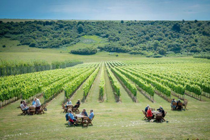 Rathfinny Estate, East Sussex vineyards in uk