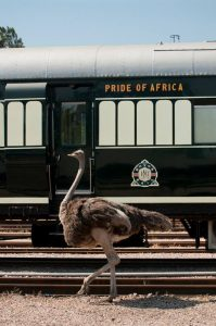 Unique Luxury Trains journeys around the World The Rovos Rail South Africa safari