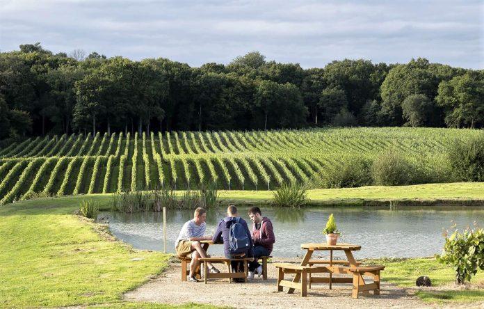 bluebell vineyard to visit in uk jpeg