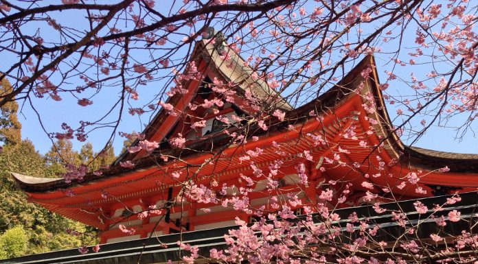 cherry blossom season in Japan March