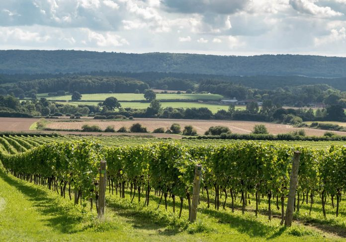 nyetimber vineyards in uk